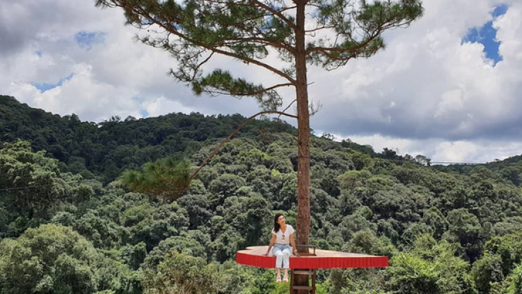 Tourists eagerly flock to check in at unique pine tree in Da Lat