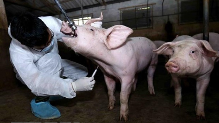 Animal inspection stations set up to prevent spread of African swine fever