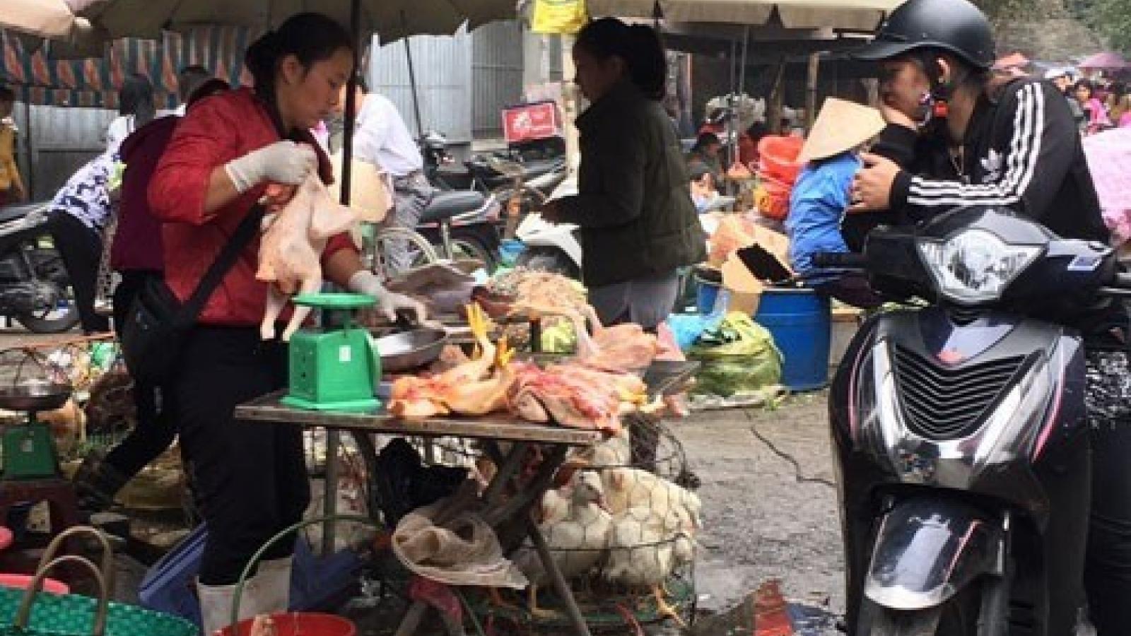 Bird flu outbreak casts pall over Tet