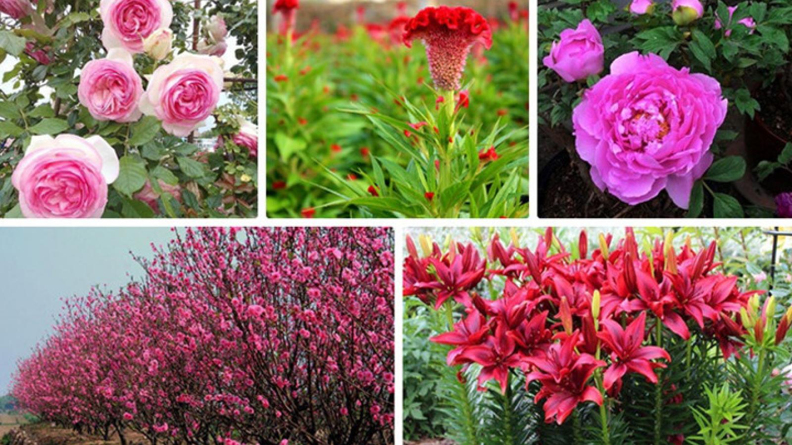 Novel flowers for Tet