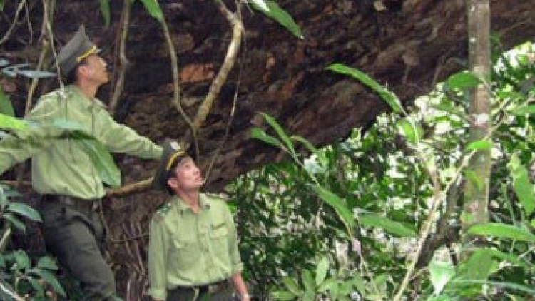 Uppermost Na Hang district protects biodiversity