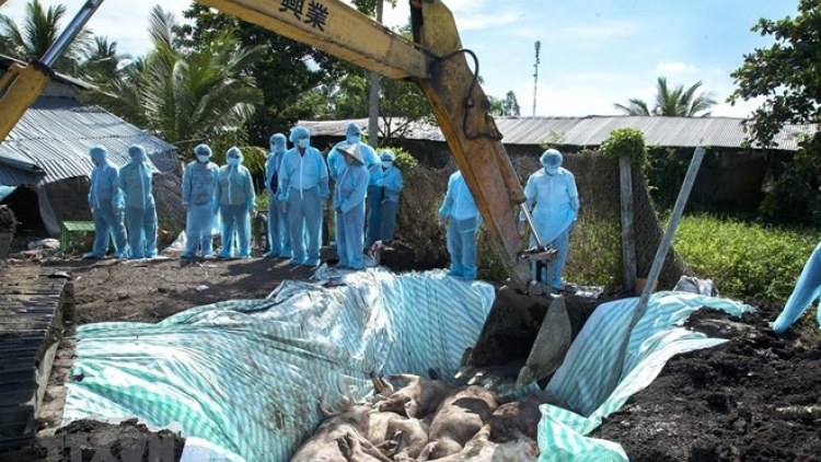 PM requests stepping up fight against African swine fever