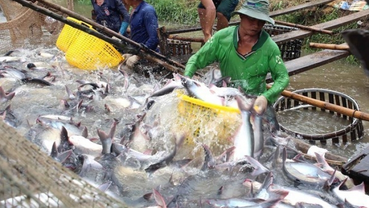 Tra fish exports estimated to increase 6.6% in 2016
