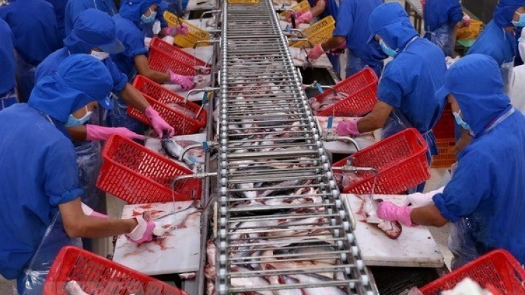VASEP urges strict quality control of tra fish exported to China