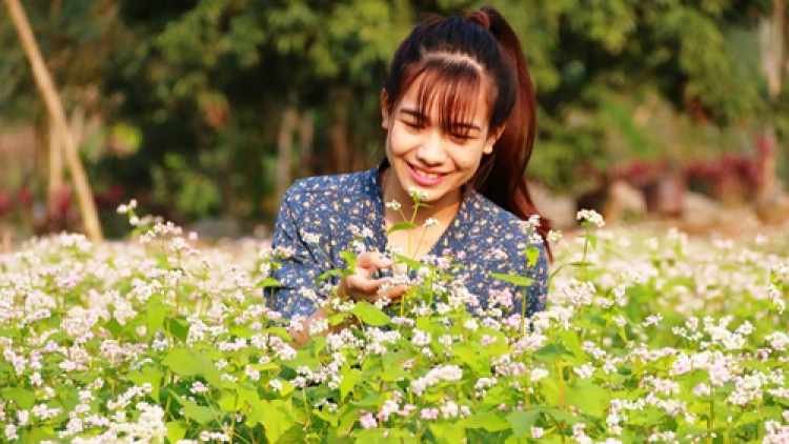 Ninh Binh brightened with Tam Giac Mach flowers blooming