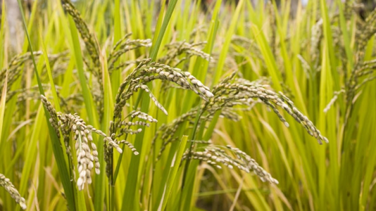 NZ, Vietnam to share expertise in agriculture sector