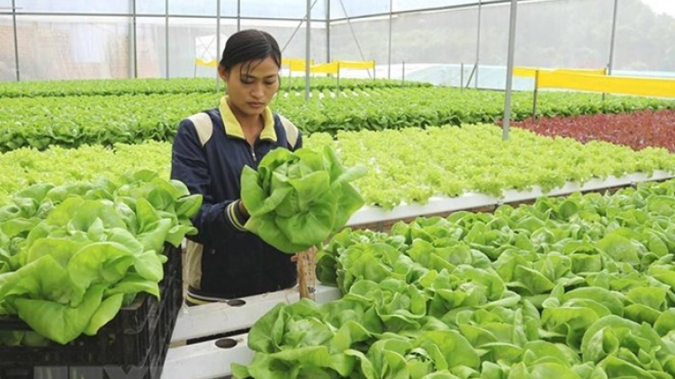 HCM City steps up cooperation with Australia in high-tech agriculture