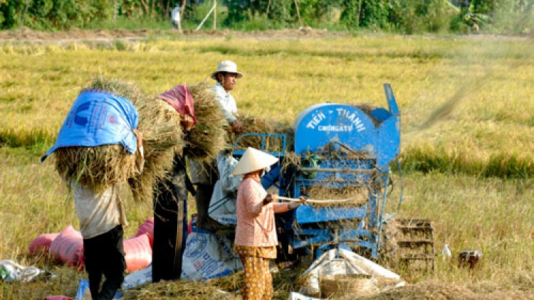 Mekong Delta finds it hard to attract FDI in agriculture