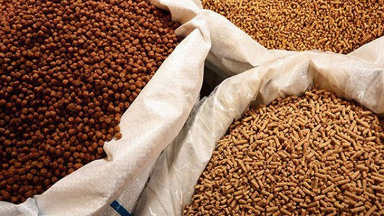Imports of animal feed continue upward trend