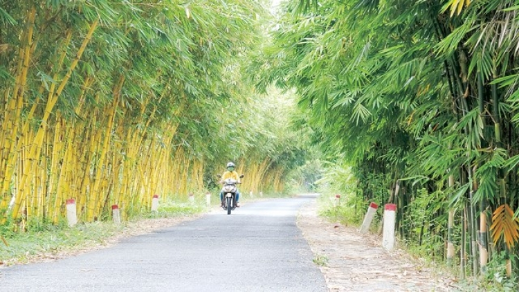 Vietnamese bamboo species conserved in Dong Thap province