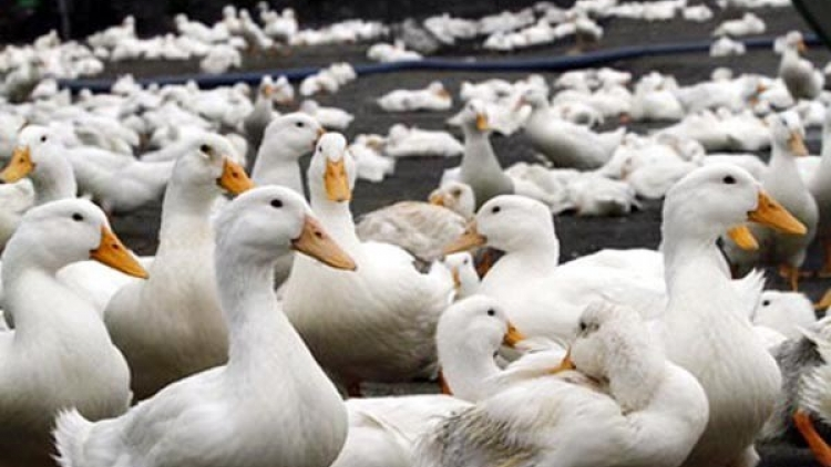 399 districts identified as high risk areas for bird flu