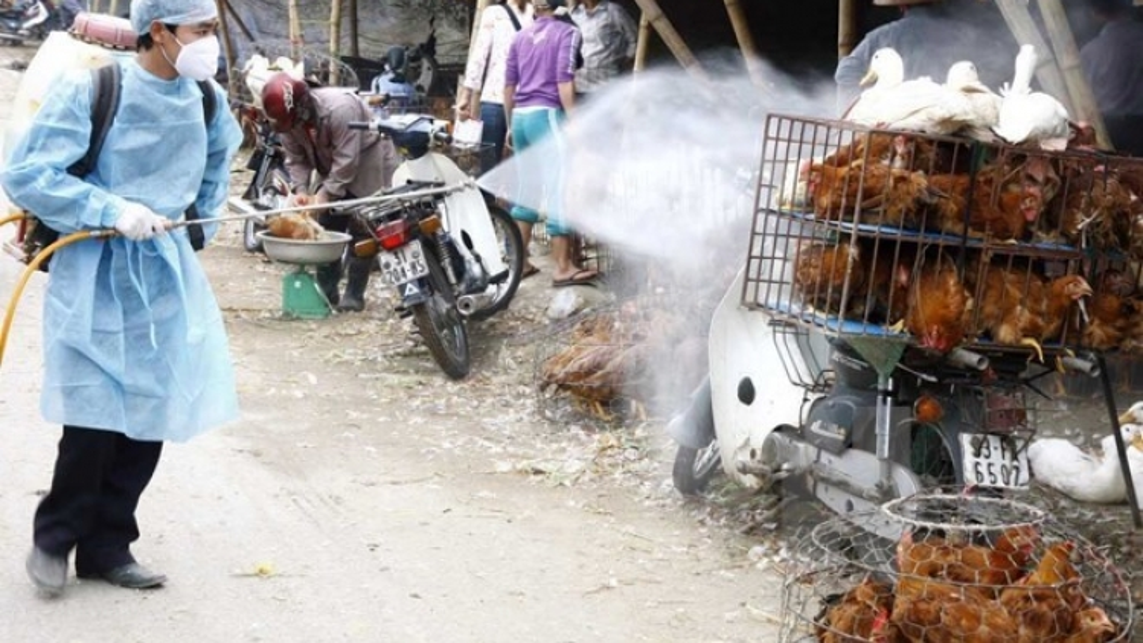 Saudi Arabia suspends live poultry import from Vietnam over bird flu