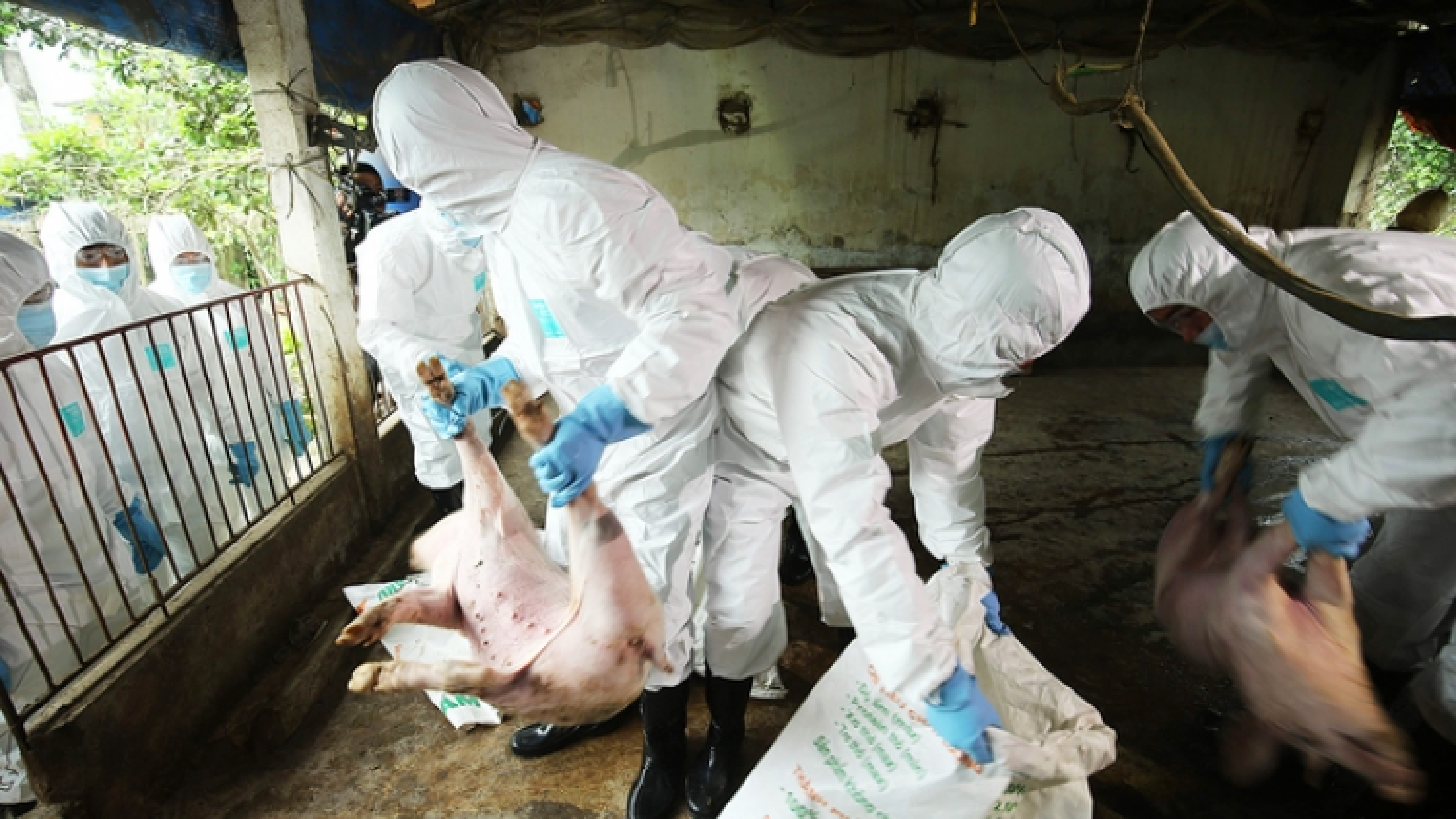 Hanoi rehearses fight against outbreak of African swine fever
