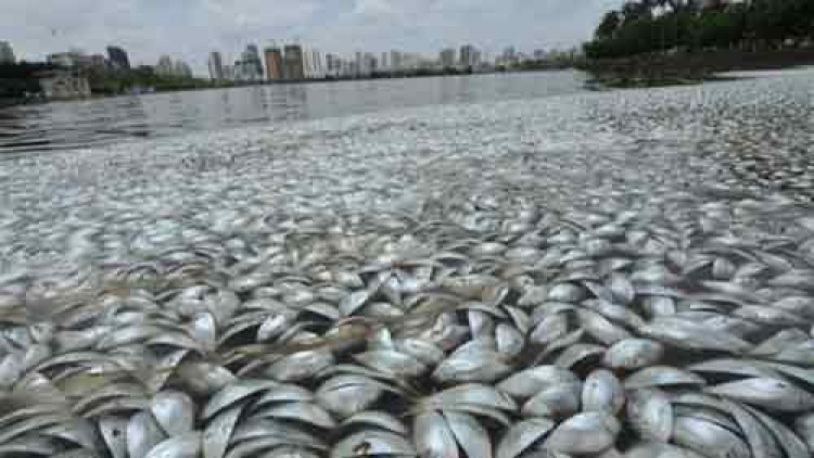 Coastal water monitored in central region in wake of mass fish death