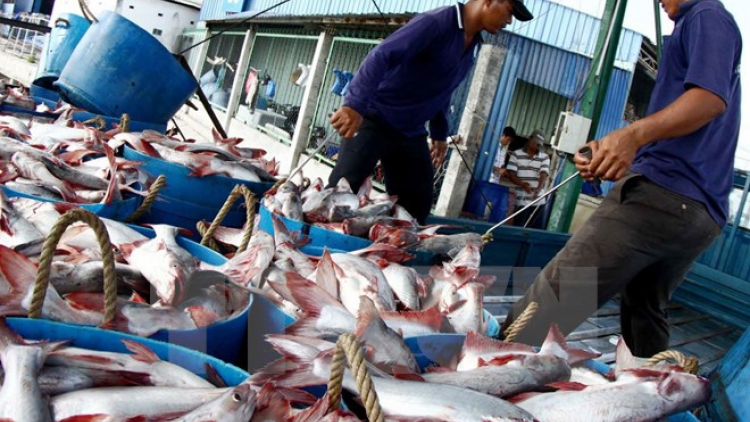 Exports of catfish to the US may stop in September