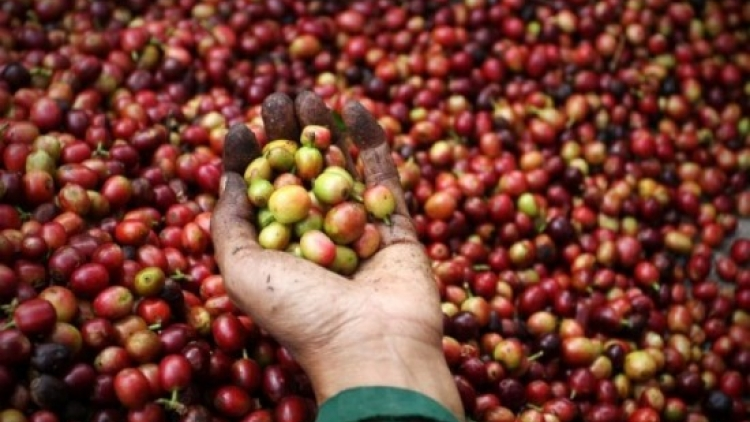 Coffee exports estimated at US$3 billion