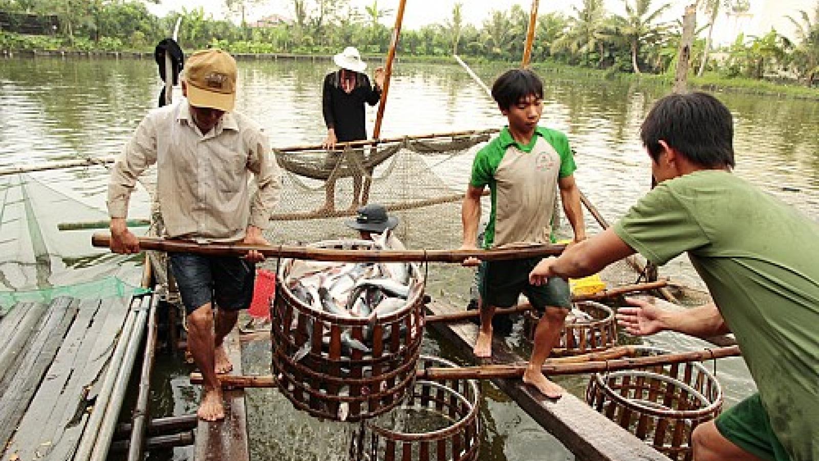 Vietnamese farmers rush into raising catfish over Chinese demand