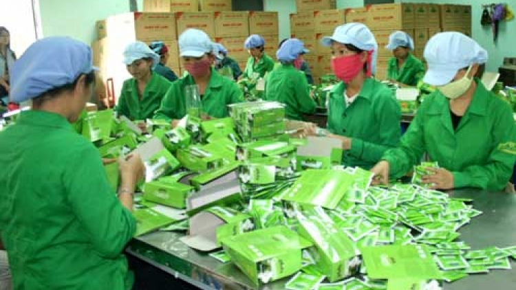 Tea exports suffer decline in volume and value