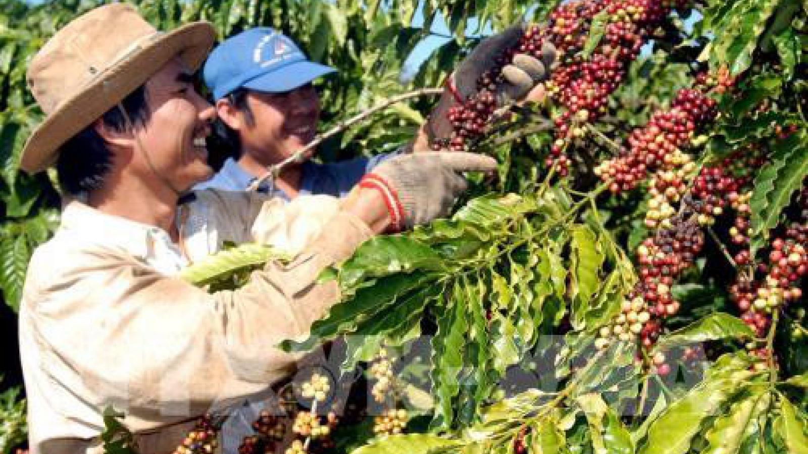 Vietnam exports to Algeria surge 17% in nine months