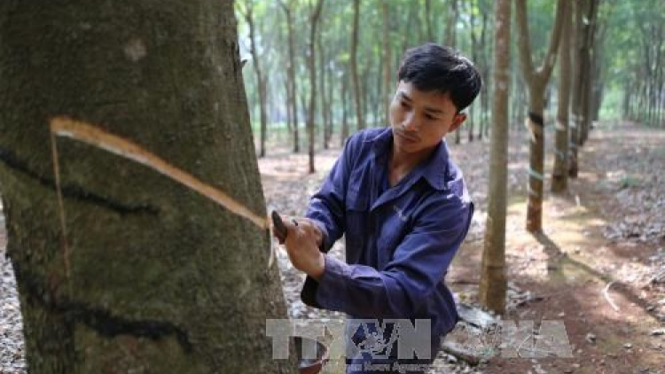 Central Highlands not to expand rubber area