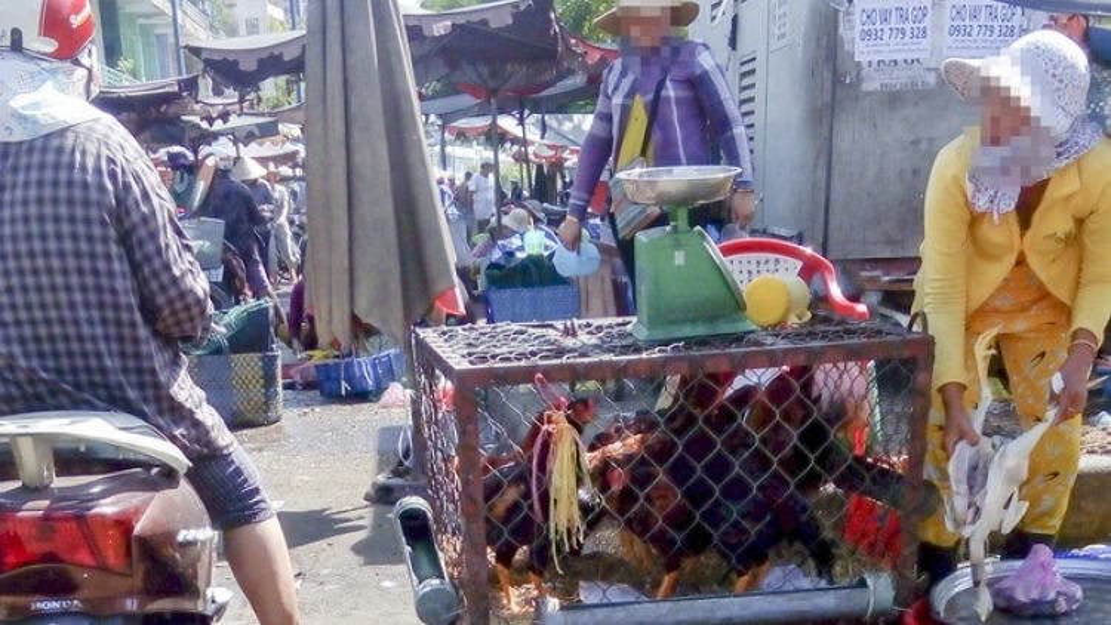 HCM City on alert against bird flu outbreaks