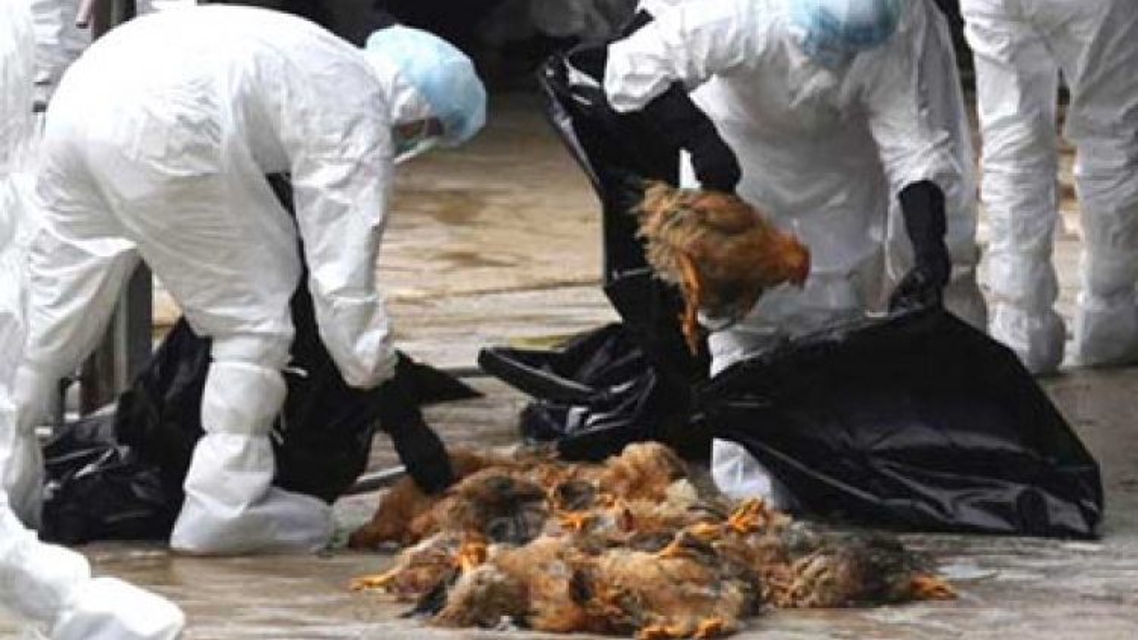 Vietnam takes action against bird flu