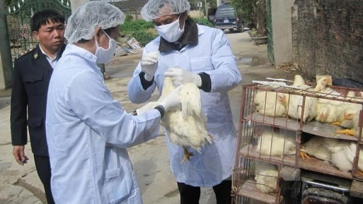 Tay Ninh acts to prevent bird flu spread