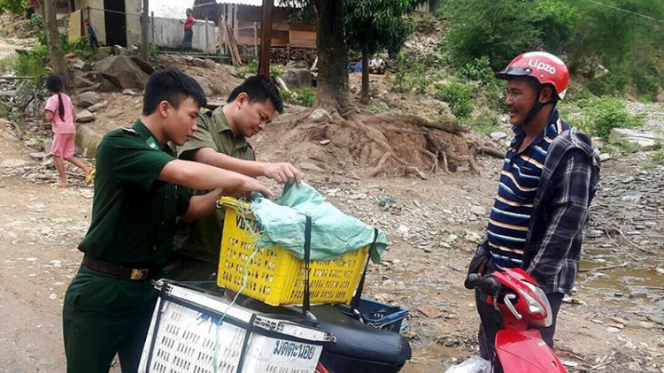 Nghe An reports additional outbreaks of African swine fever