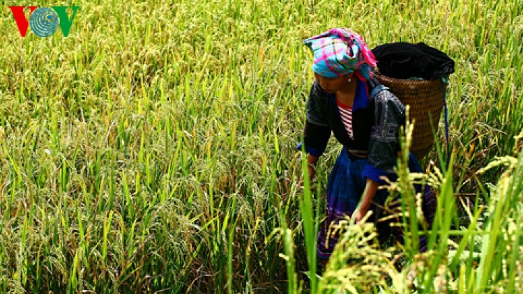Rice exports thrive in new year