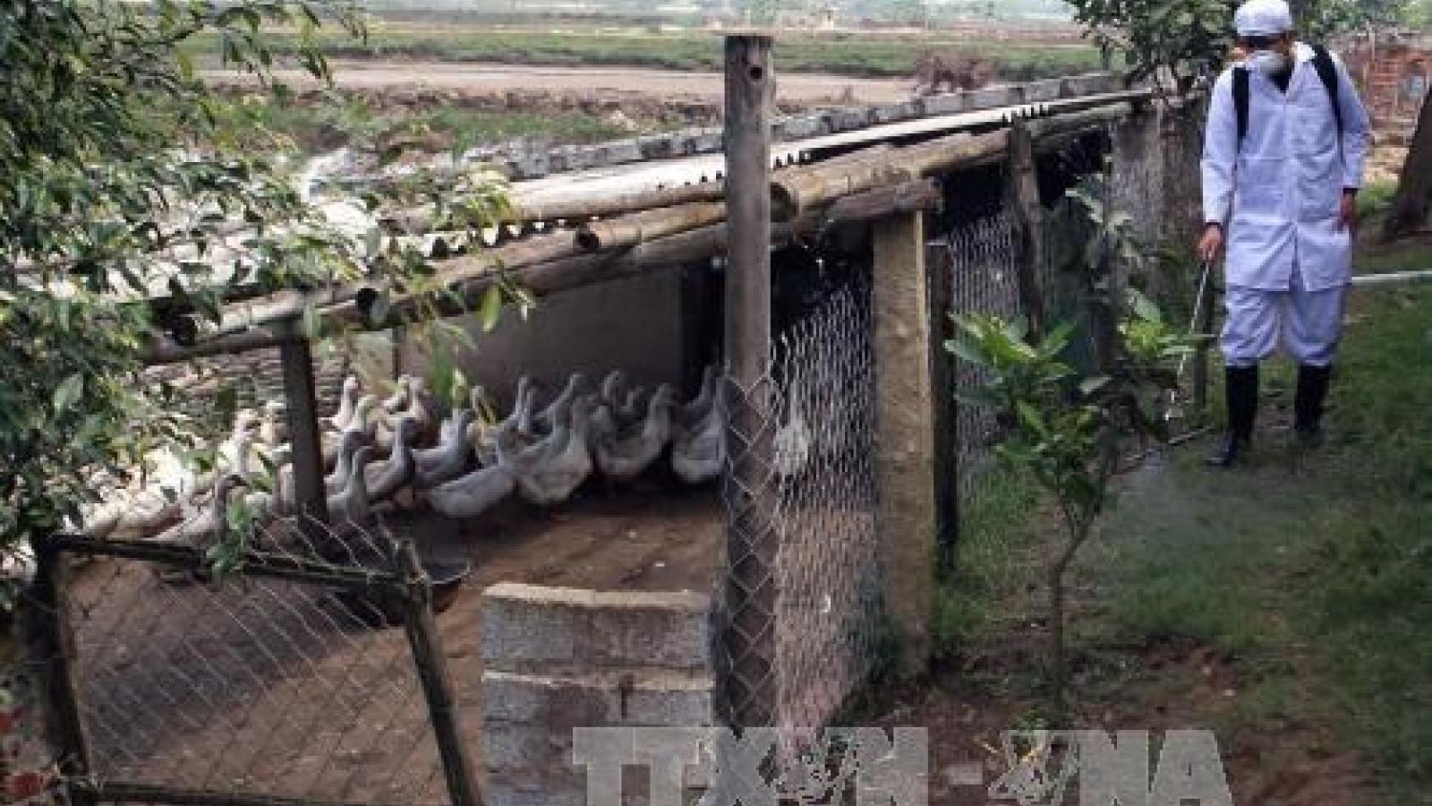 Thanh Hoa intensifies A/H7N9 avian flu prevention