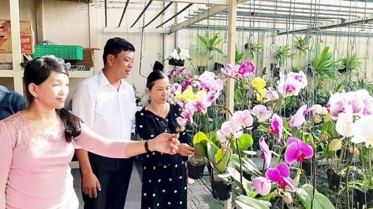 HCM City seeks to expand orchid market