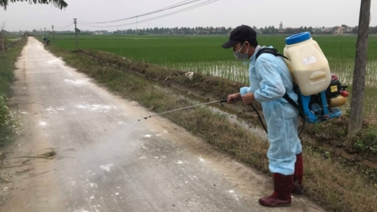 Thanh Hoa designs new initiative to prevent African swine fever