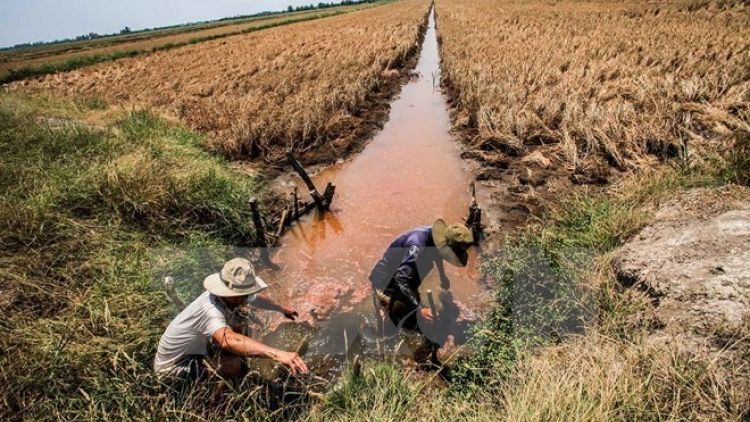 Drought impacts to be discussed at Mekong Delta forum