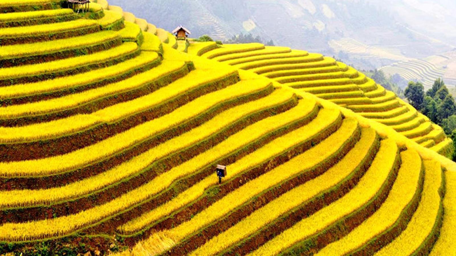 Hoang Su Phi terraced fields, masterpieces of minority groups
