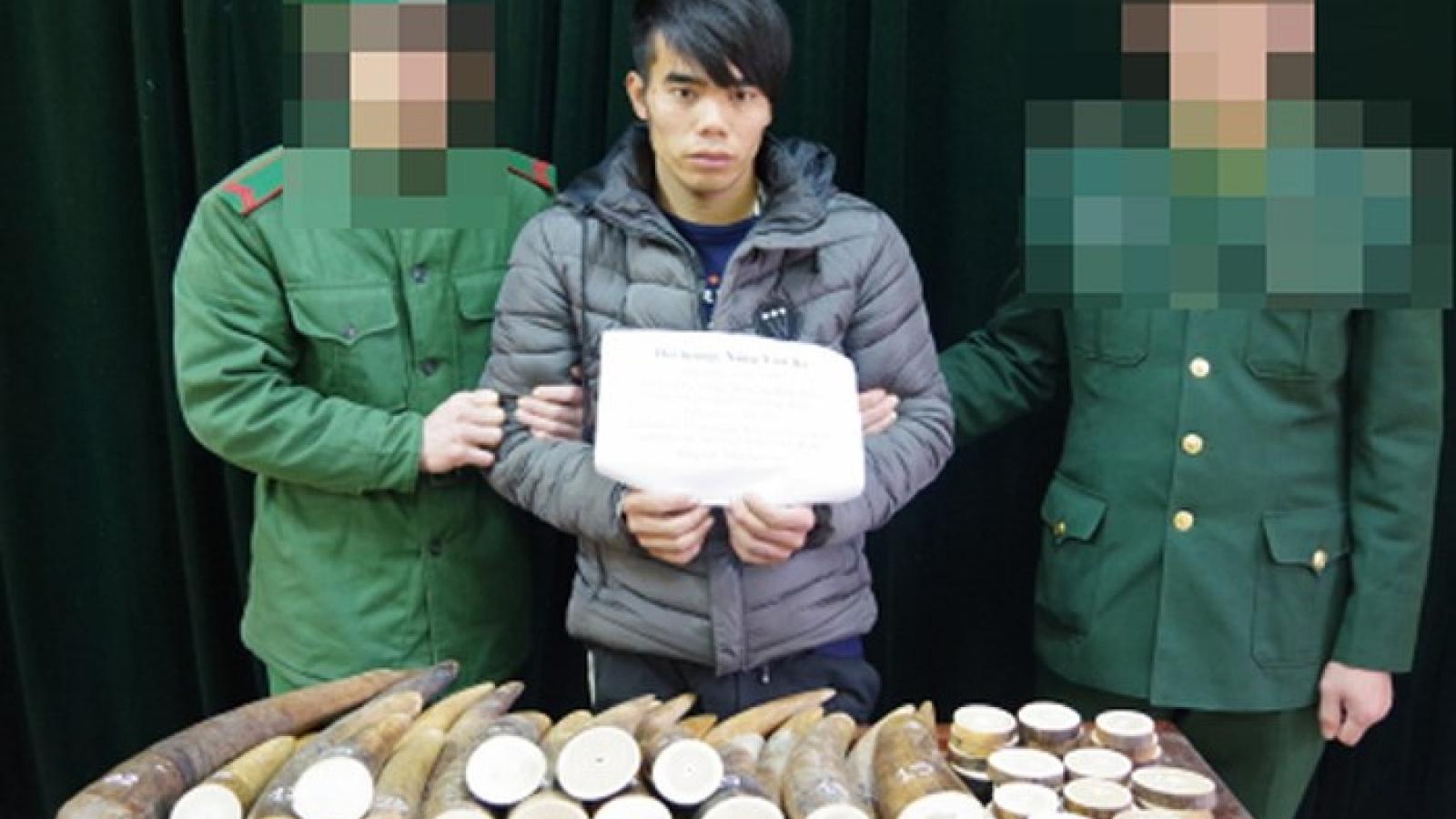 Cao Bang border guards seize 51 kg of smuggled ivory