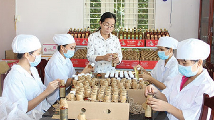 Le Nguyen, a passionate for dragon fruit products