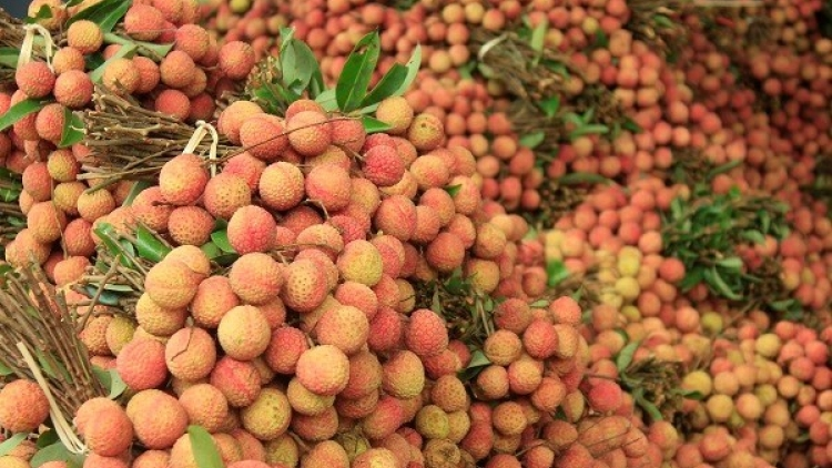 China buys over 9,500 tons of lychees