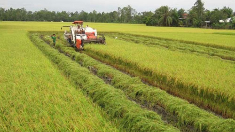 JICA helps launch agricultural value chains
