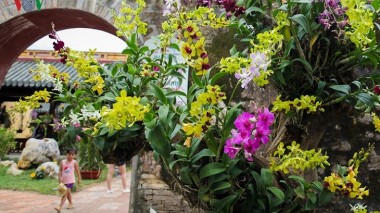 Exquisite orchid and bonsai displays in Hue