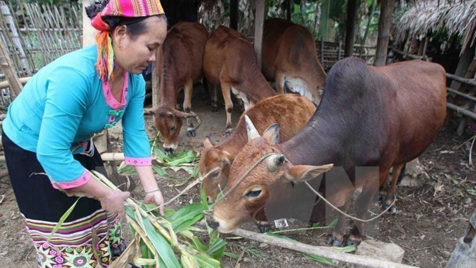 Vietnam accelerates implementation of sustainable development goals