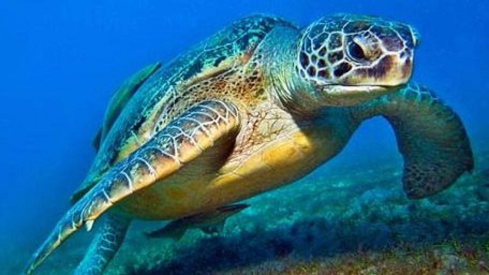 Vietnam boosts sea turtle preservation