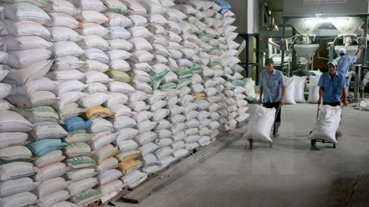Tightening rice production, export over drought, saltwater intrusion