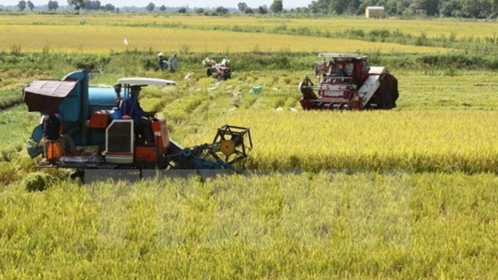 Vietnam rice exports plunge