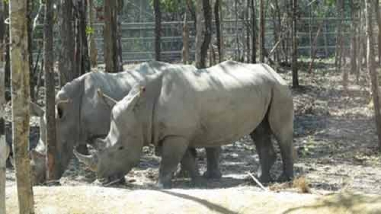 Safari park dismisses claims of endangered species deaths