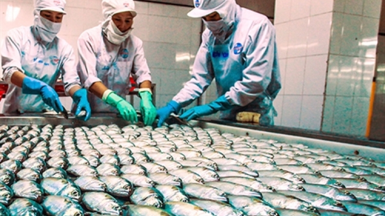 Vietnam seafood exports to benefit from TPP
