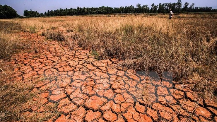 Texting campaign raises funds for drought, salinity-hit areas