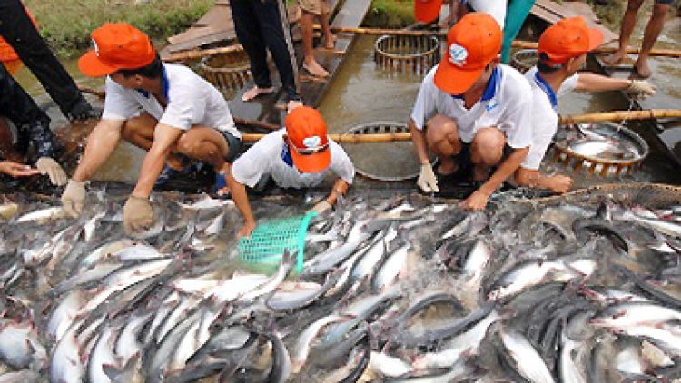 Regulations on Tra fish amended