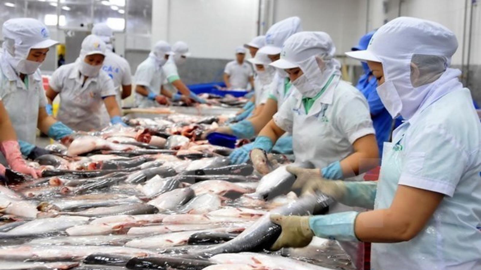An Giang enjoys bumper tra fish production