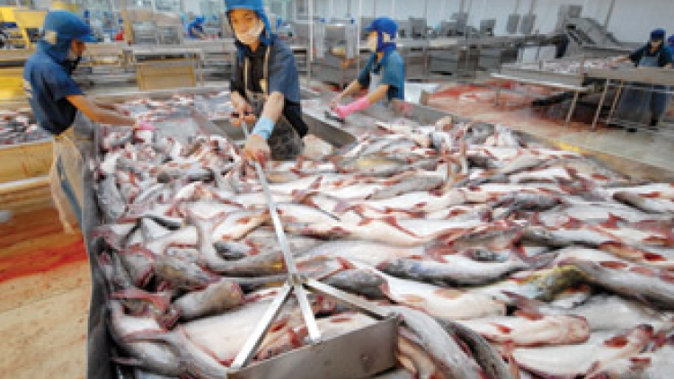 Ministry strives for sustainable development of tra fish
