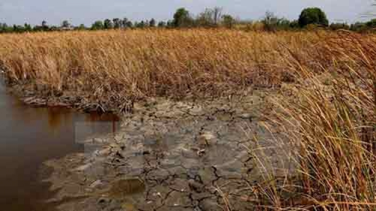 Rice allocated to drought-hit provinces
